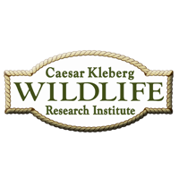 Caesar Kleberg Wildlife Research Institute