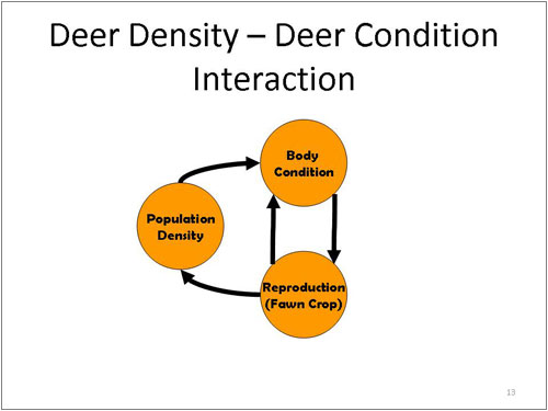 Figure 13. Deer Density - Deer Condition Interaction